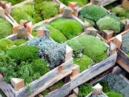 How a moss garden can improve indoor air quality in your office
