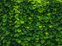 The cost of maintaining green walls