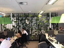Replacing real greenery at KnightFrank's Sydney corporate office