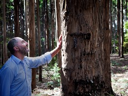 A truly renewable resource: Tasmanian Timber's sustainability journey