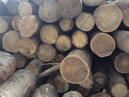 Eco Timber Group: Certified Sustainable