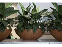 Ambius Rustica Planters Add Winter Warmth and Texture