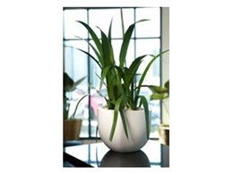 Create a workplace hideaway with Elliot planters from Ambius