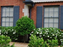 Decorative shutters for homes bring doors and windows to life