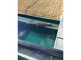 Dincel modular formwork delivers watertight solution to crocodile farm