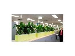 Indoor plant screens from Ambius help reduce noise in offices