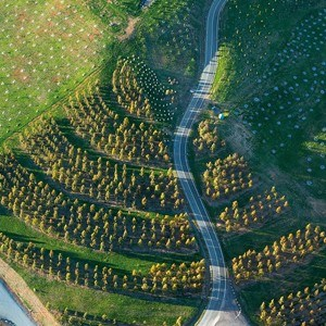 Australian landscape architects tcl top off a great year for Tcl landscape architects adelaide
