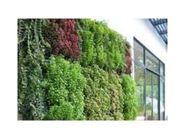 VertiGreen Hybrid pre-grown 3D trellis green walls available from Moodie Outdoor Products