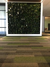 Plank carpet tiles deliver acoustic advantages at Show Technologies, Sydney