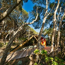 Secretive VIC house grows out of the land, moves in time with trees