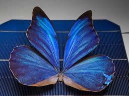 Butterfly wings inspire smart design solar windows