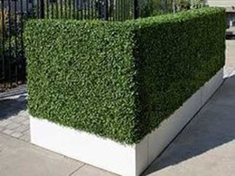 What to do and ask when buying artificial hedges