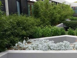 Junglefy explains the many benefits of green roofs in urban environments