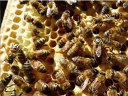 How perforated metal is helping beekeepers harvest honey more efficiently