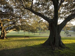 $8M budgeted to increase Sydney's tree cover