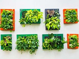 The evolution of the vertical garden