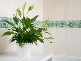 Keeping your bathroom free of odours and mould