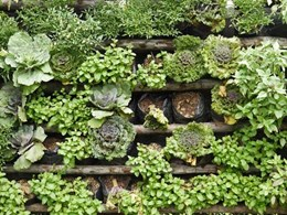 How artificial green walls can benefit your home or office