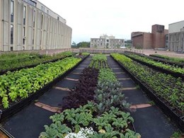 Projex Group's Top 20 favourite green rooftops: Brandeis University Rooftop Farm, USA