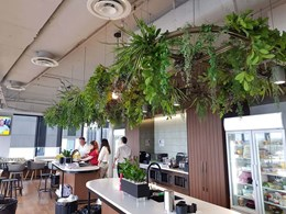 Hanging greenery feature transforms new staff canteen