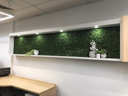 Evergreen Moss framed for Queensland retail head office wall