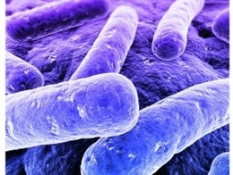 Let us eradicate Legionella from Australian hospitals with smart design