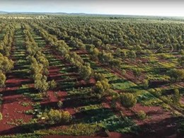 Australian reforestation gets a boost with new Carbon Neutral partnership