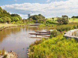 Wasteland to wetland: The transformation of Sydney Park