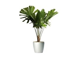 Ambius support rainforests with new rainforest species additions to indoor plant range
