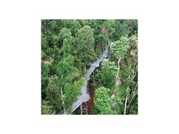 Arup celebrate opening of Mamu Rainforest Canopy Walkway