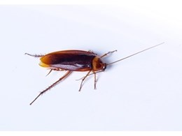 Cockroach pest control services supplied by Termitrust