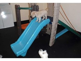 Dalsouple DalRollo rubber flooring installed at dog day care centre