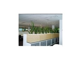 Indoor plants for Green Star rating buildings from Ambius