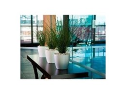 Interior plantscaping design service from Ambius