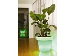 Lunar pot from Rentokil Tropical Plants