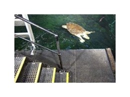 SC-R38 square mesh grating from Staircare Australia used to create access platform for Sydney Aquarium