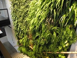 The insulating benefits of greenwalls