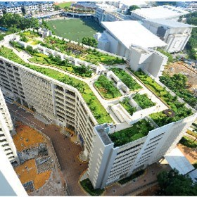 Green roofs and walls – we have them covered