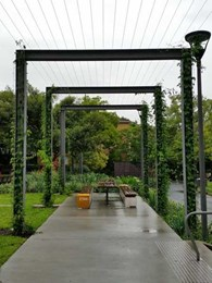 Tensile fabricates steel structure for new arbour at Sydney's Foley Park