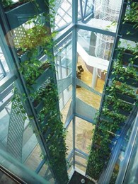 Fytogreen designs green element on aged care facility atrium with 88 planter boxes