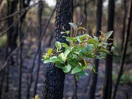 DECO Australia teams up with Building Angels to support Black Summer bushfire victims