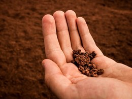 Mitigating global warming with soil carbon