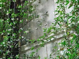 Designing green façades on heritage buildings