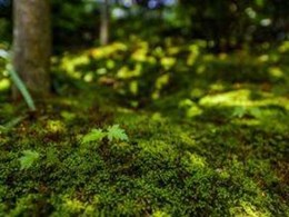 How moss gardens improve indoor air quality