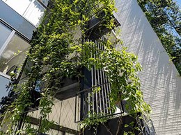 4 important design considerations for vertical green walls